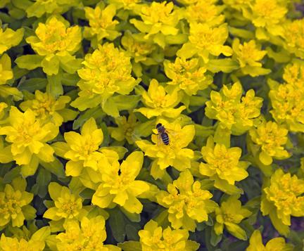 Yellow flower Colorado copy